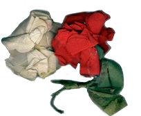 Red & white roses worn by Scaife